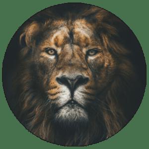 Muurcirkel Lion | Forex | 80 cm | Uniek
