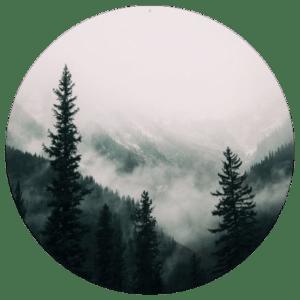 Muurcirkel Forrest | Forex | 80 cm | Uniek
