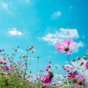 Tuinposter Paarse Bloemen