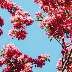 Tuinposter Roze bloemen
