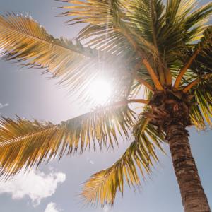Tuinposter palmboom